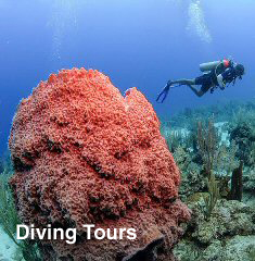 Diving Tours