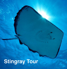 Stingray Tour