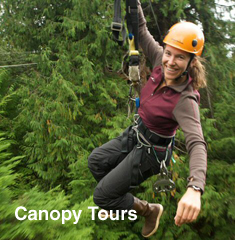 Canopy Tours