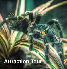 Attraction Tour